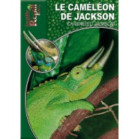 Chamaeleo Jackson - Le Caméléon de Jackson