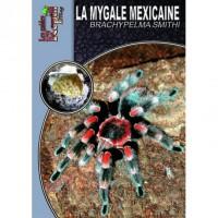 La Mygale Mexicaine - Brachypelma smithi